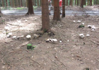 bos en paddenstoelen